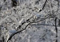 Winter | Dezember 2017