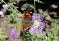 Schmetterling / Gomera